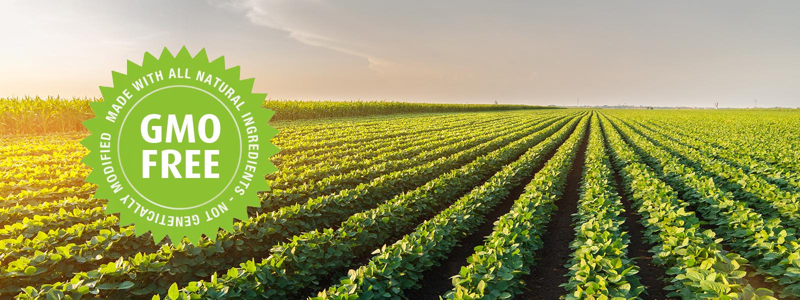 carino-ingredientes-sustentabilidade-soja-gmo-free-nao-transgenico